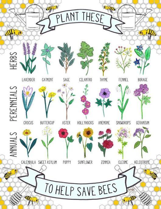 Bee Plants